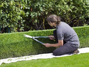 Landscape Maintenance Elmsford NY - Green Gold Landscaping