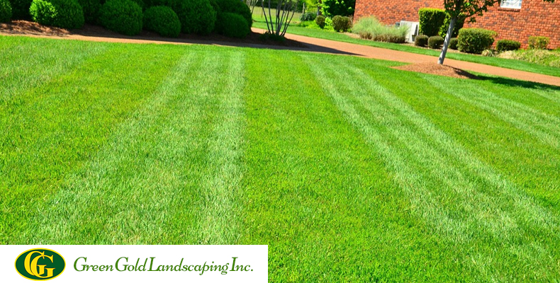 How To Maintain Your New Lawn With Care Green Gold