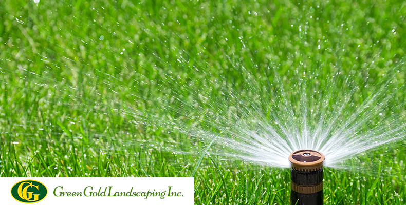 How To Do Watering After Overseeding Green Gold Landscaping Inc