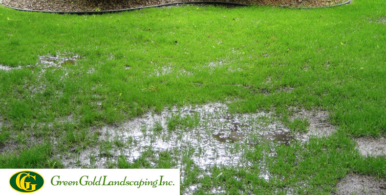 For a garden to look healthy and beautiful, water is most important. For  free flow of water in your yard, you require a drainage system. - Backyard Drainage Problems Archives - Green Gold Landscaping Inc