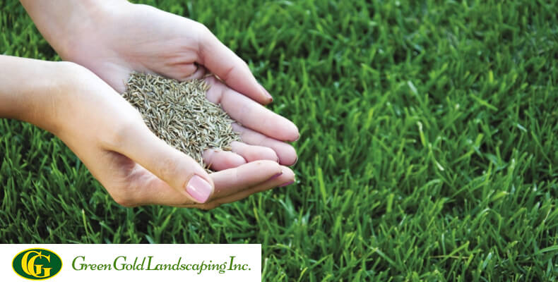 When To Plant Gr Seed Green Gold Landscaping Inc