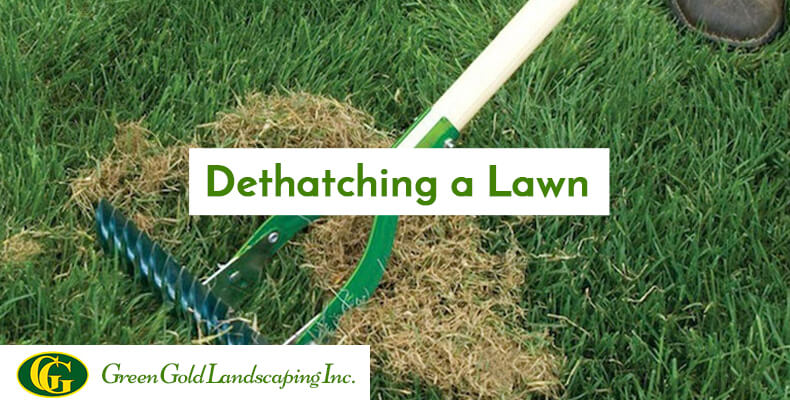 The feel of fresh green grass between your toes in the lawn is a beautiful  experience. If you get a feeling of a spongy sod, then you should identify  that ... - How To Dethatch Your Lawn Archives - Green Gold Landscaping Inc