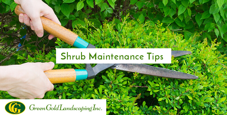 8 Shrub Maintenance Tips To Care And Shape Your Shrubbery