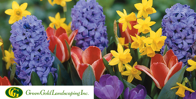 Flower Landscaping Ideas For Front Yard In Spring